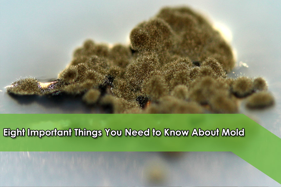 Eight Important Things You Need to Know About Mold